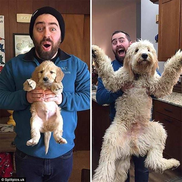 """Когда я был щенком: очаровательные фото собак """"до и после"""""""