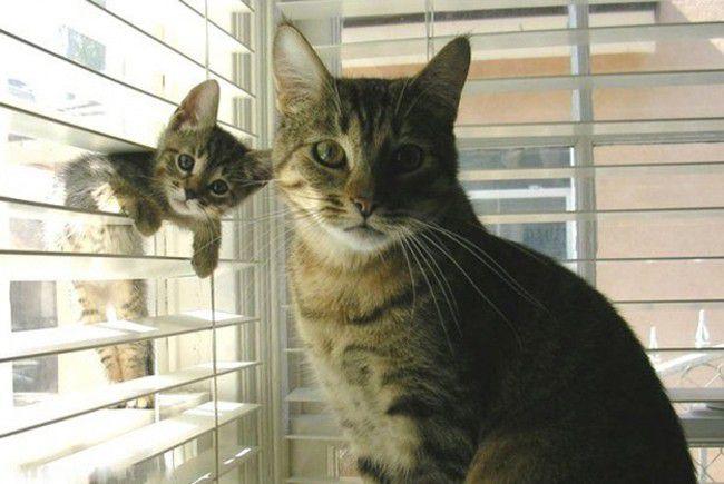 Животные-родители со своими детьми интересное, животные, родители, дети