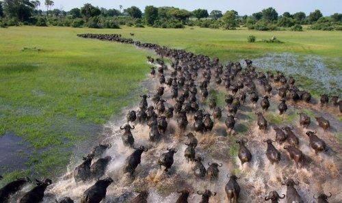 Впечатляющие фотографии большого скопления диких животных