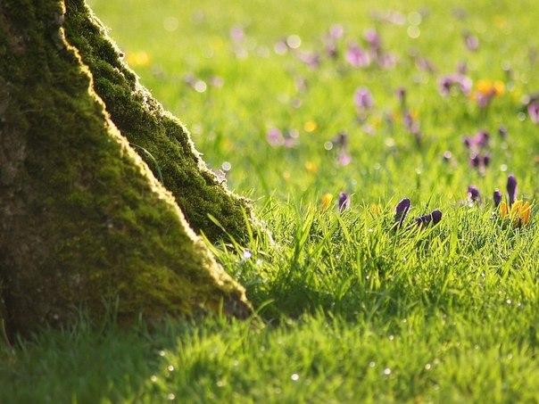Что можно сажать под деревьями в саду