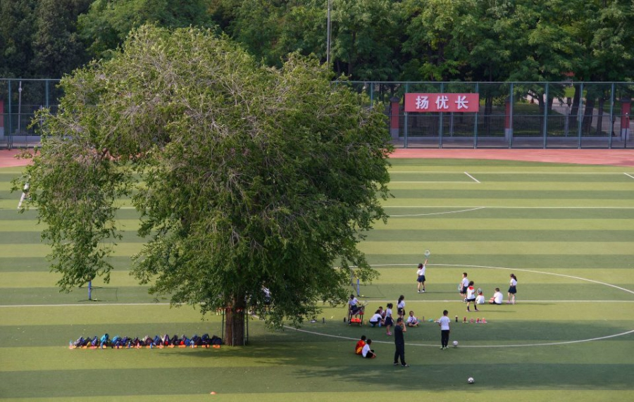Дерево посреди школьного стадиона