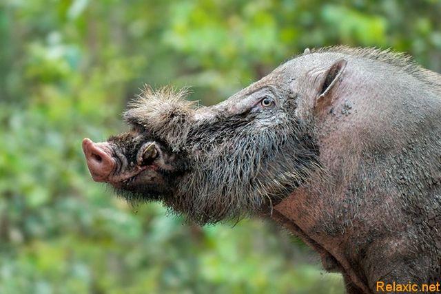 wild_animals_032
