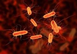 Ученые нашли эффективный способ  борьбы с кишечной палочкой