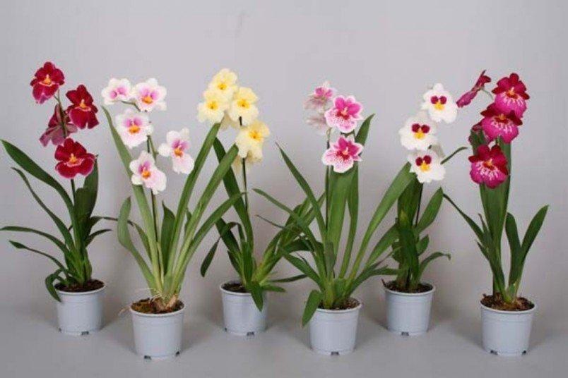 Как оживить орхидеи и другие комнатные растения