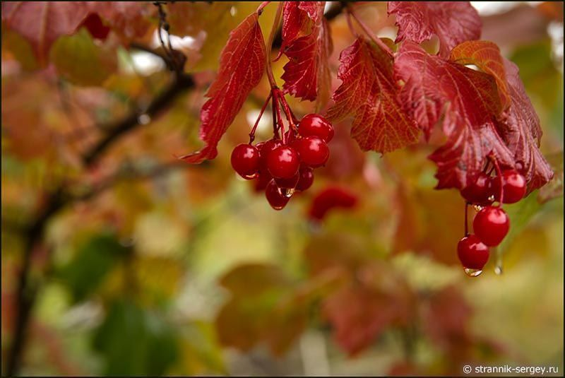 Дождливая осень