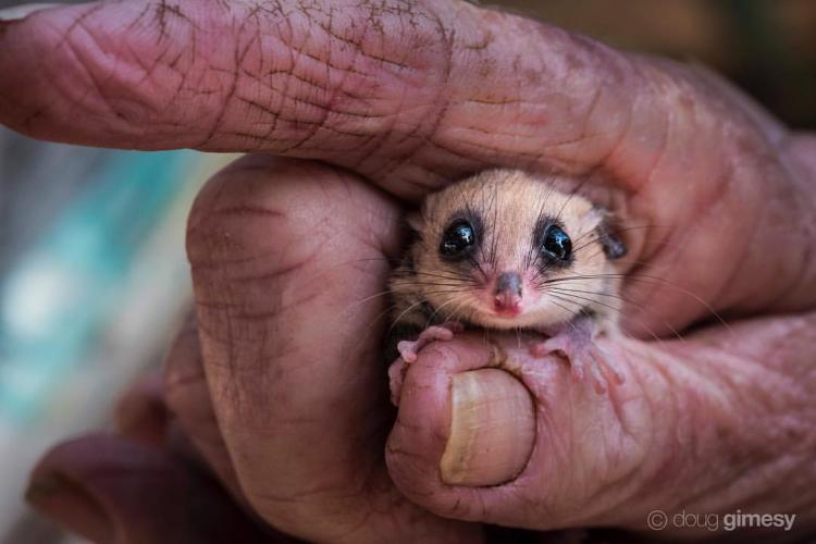 13 доказательств, что в Австралии водятся не только кусачие и ядовитые существа!