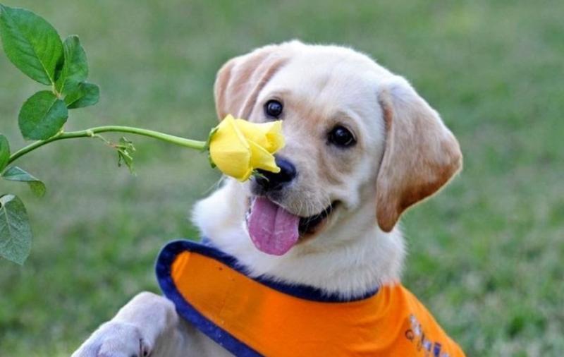 Поведение собаки - 7 интересных вопросов и ответов