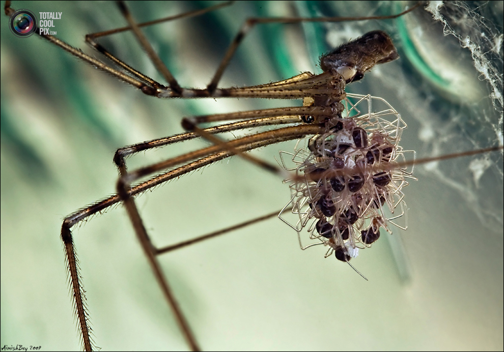 aimishboy 026 Удивительная макрофотография: неожиданно гламурные насекомые и многое другое