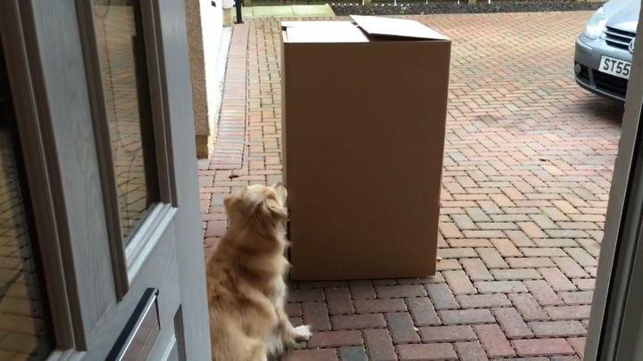Девушка долгое время не виделась со своей собакой. Реакцию животного при встрече нужно видеть!