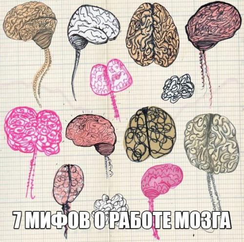 7 мифов о работе мозга.