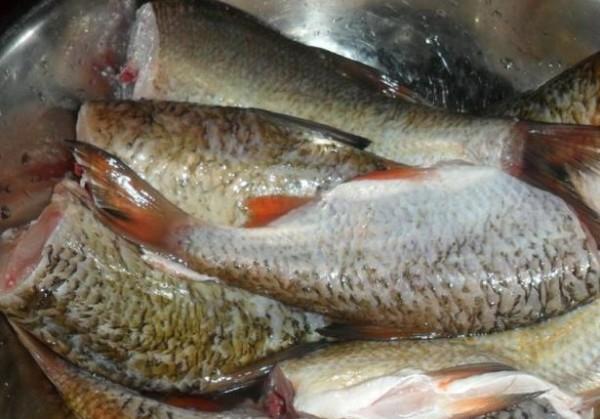 Приготовление консервы из речной рыбы в домашних условиях