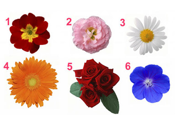 Выберите цветок и узнайте та…