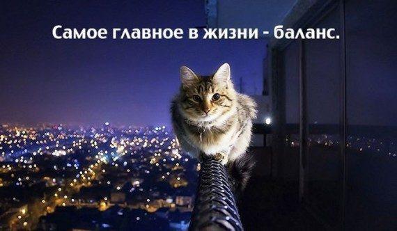 http://mtdata.ru/u12/photo7656/20797573878-0/original.jpg#20797573878