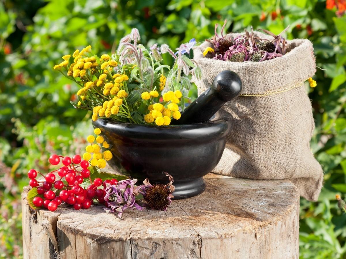 Противопаразитарные Растения...