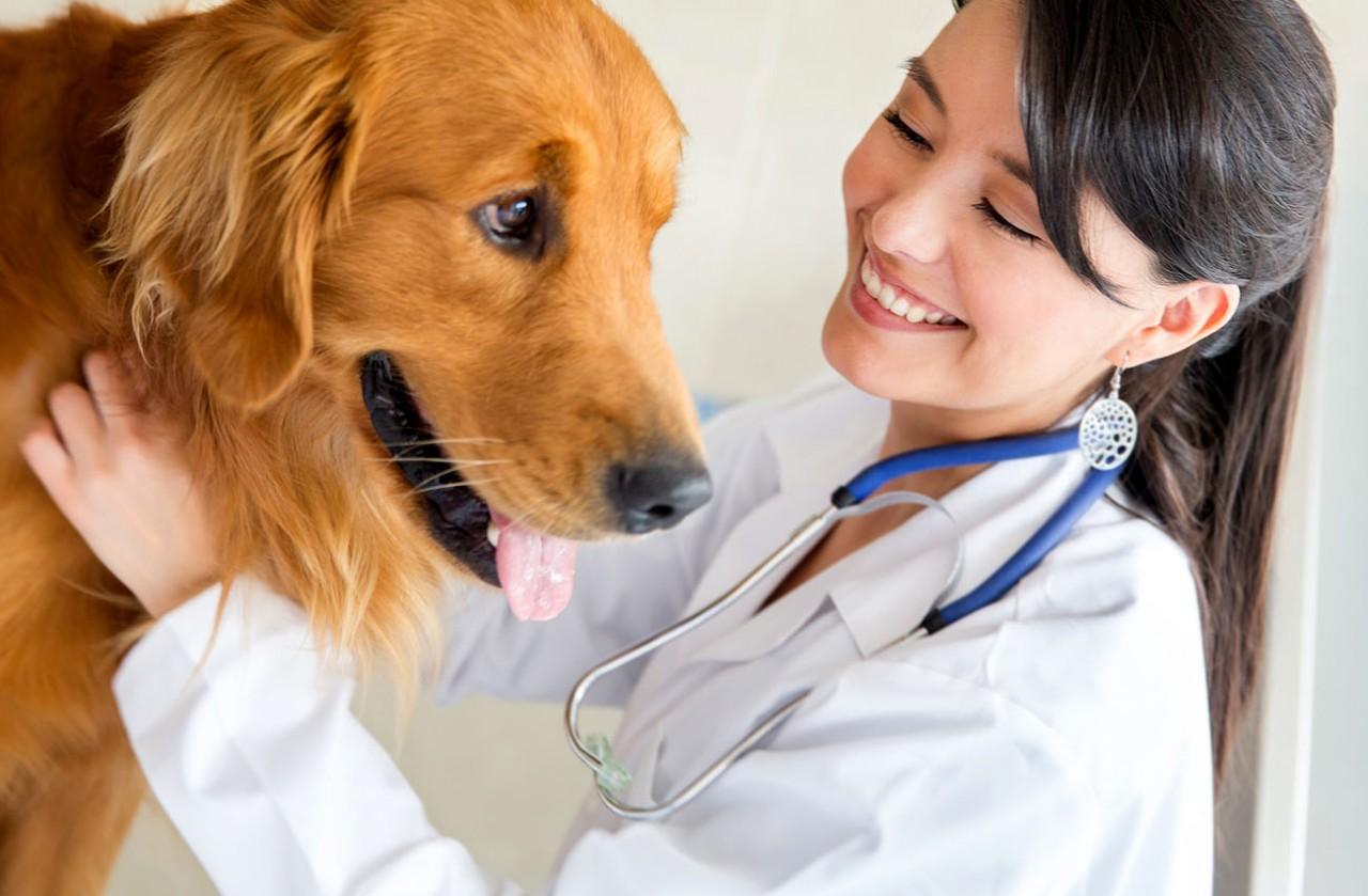 28 апреля - Всемирный день ветеринарного врача
