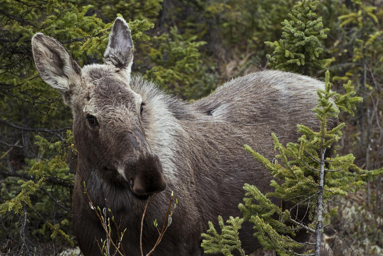 США. Аляска. Прогулка по Национальному парку Денали. (NPS Photo/Katie Thoresen)