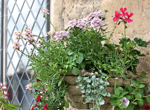 Однолетники в подвесных корзинках: выбор корзины, почва, уход, подбор растений