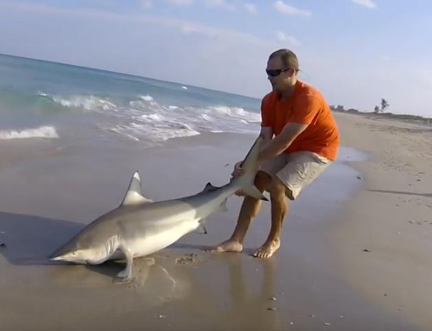 Спасение запутавшейся в рыболовной леске акулы