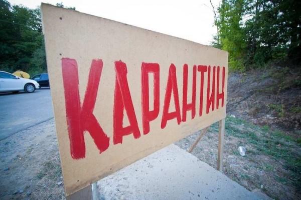 В Крыму бродят бешеные собак…