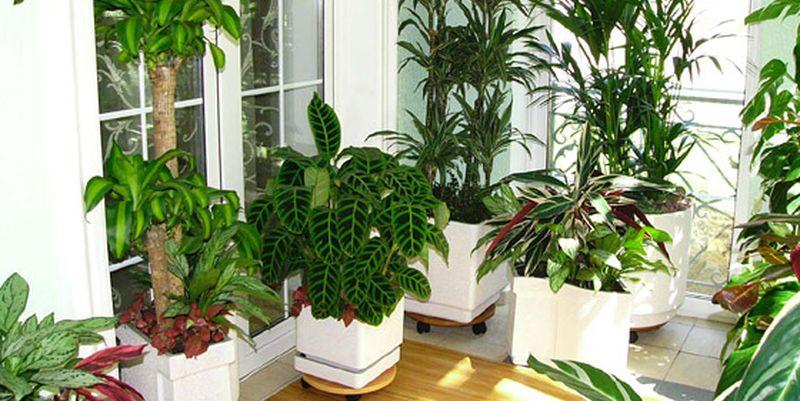 Ученые сделали грандиозное открытие о растениях
