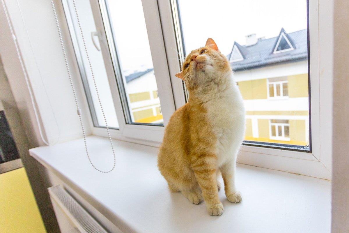 Песец: Порошенко начал постить в своем аккаунте фотки животных