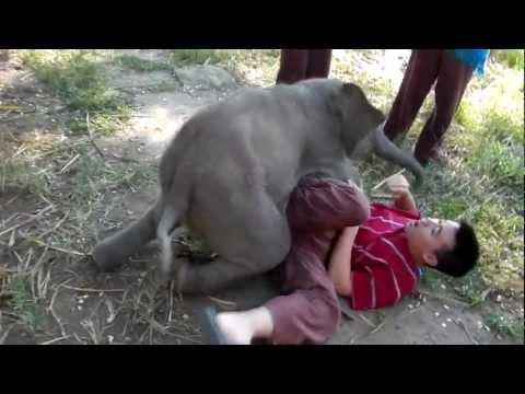 2-месячный слоненок Тара которая любит обнимашки