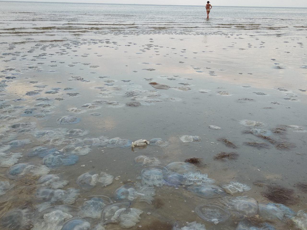 Медузы на Азове