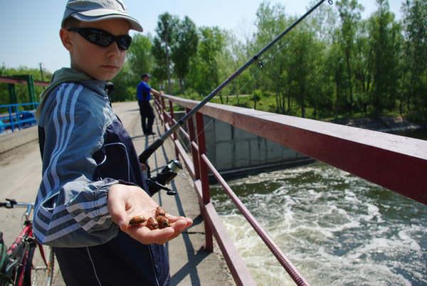 ловля рыбы на печенку куриную