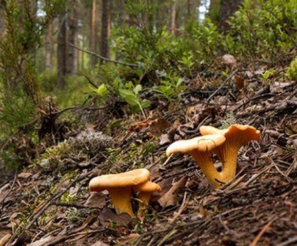 Всё ли мы знаем о грибах?