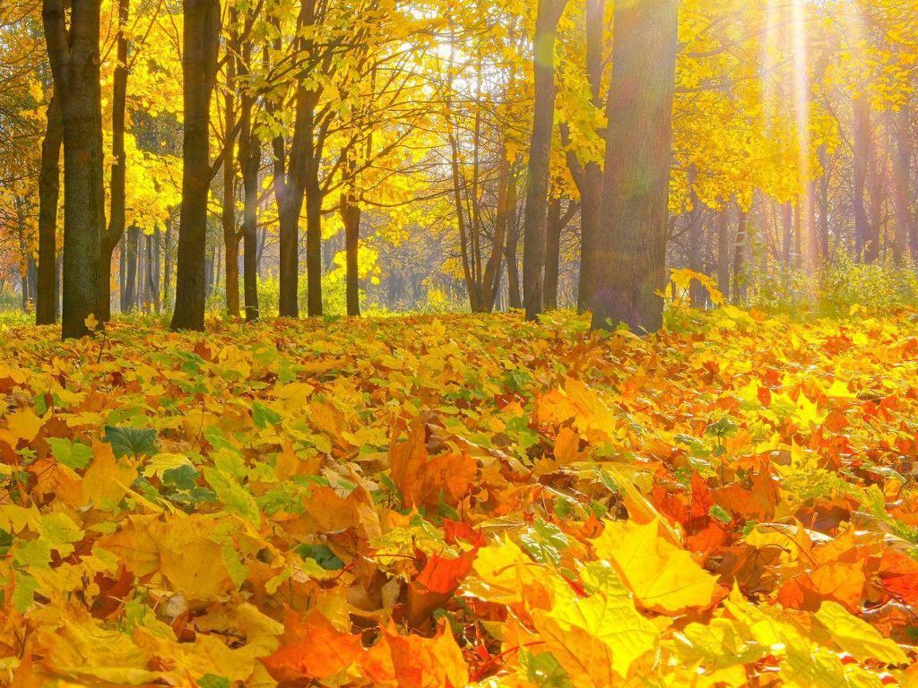 Опавшие листья в лесу.