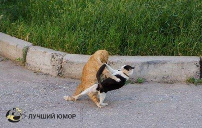 — Миледи, разрешите с вами потанцевать! настроение, фото, юмор