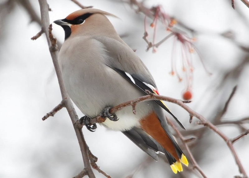Самые редкие и самых красивые птицы в мире