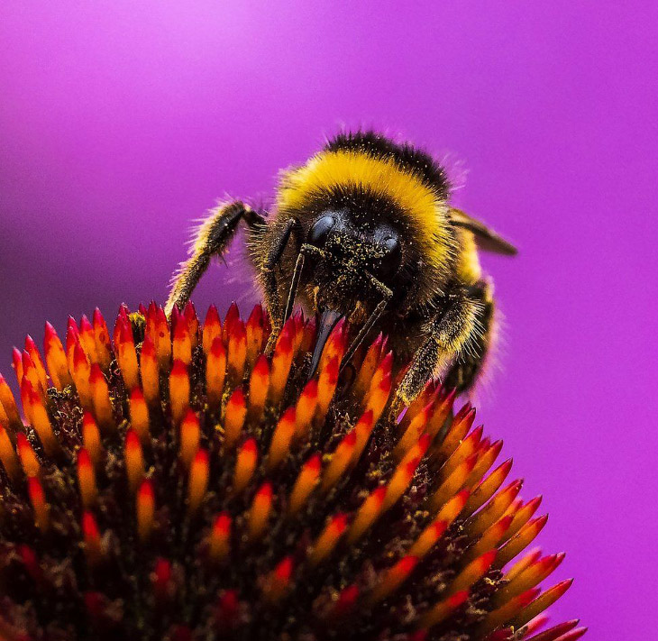 Лучший садово-парковый фотограф 2019