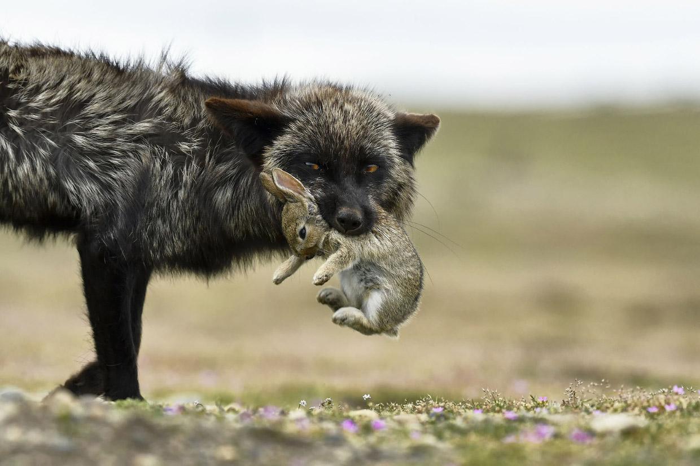 Лучшие кадры с конкурса от National Geographic 2017