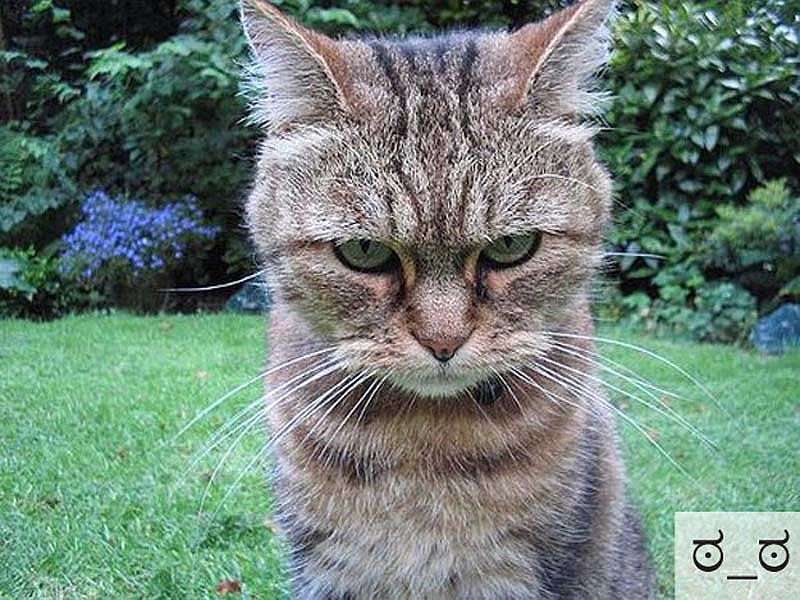 catsmiles 16 Кошачьи смайлики