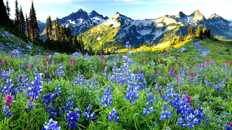 картинки на рабочий стол природа цветы № 516410 без смс