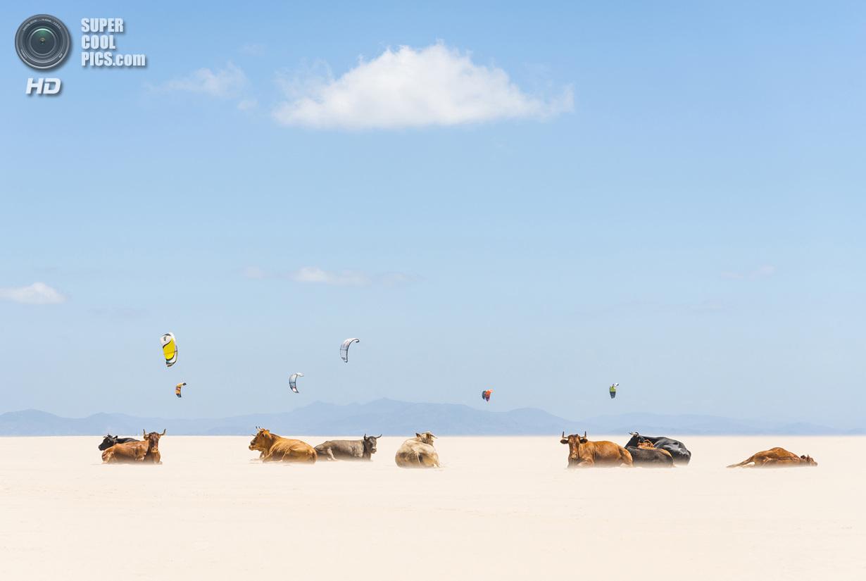 Лучшие снимки фотоконкурса National Geographic 2013