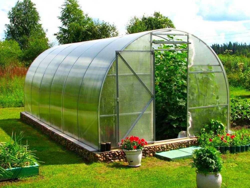 Советы по выращиванию овощей в теплице