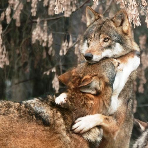 Животные, у которых и нам можно поучиться верности и любви