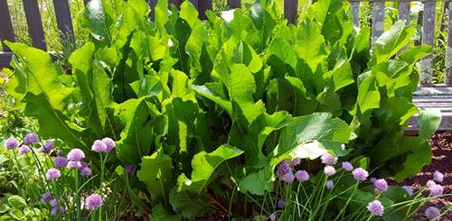 Самые неприхотливые овощи для дачи: что легко вырастить даже новичку