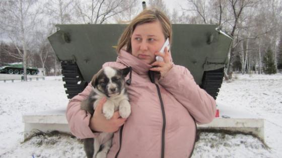 Спасли из-под танка четверых щенков в парке Победы Бердска