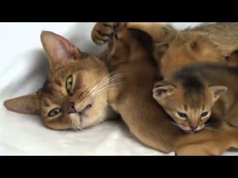 Котята с мамой кошкой
