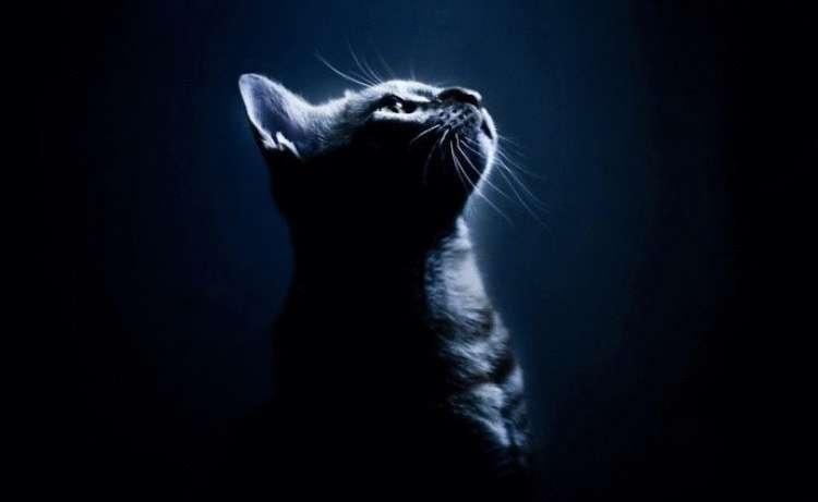 Кошка будит ночью: как отучить питомца мешать вам спать. Способы