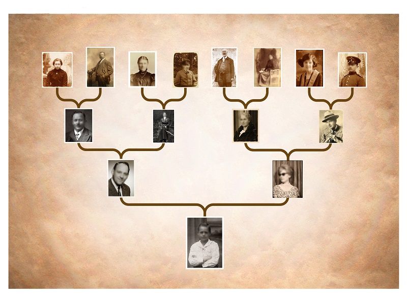 родовое дерево бабушки