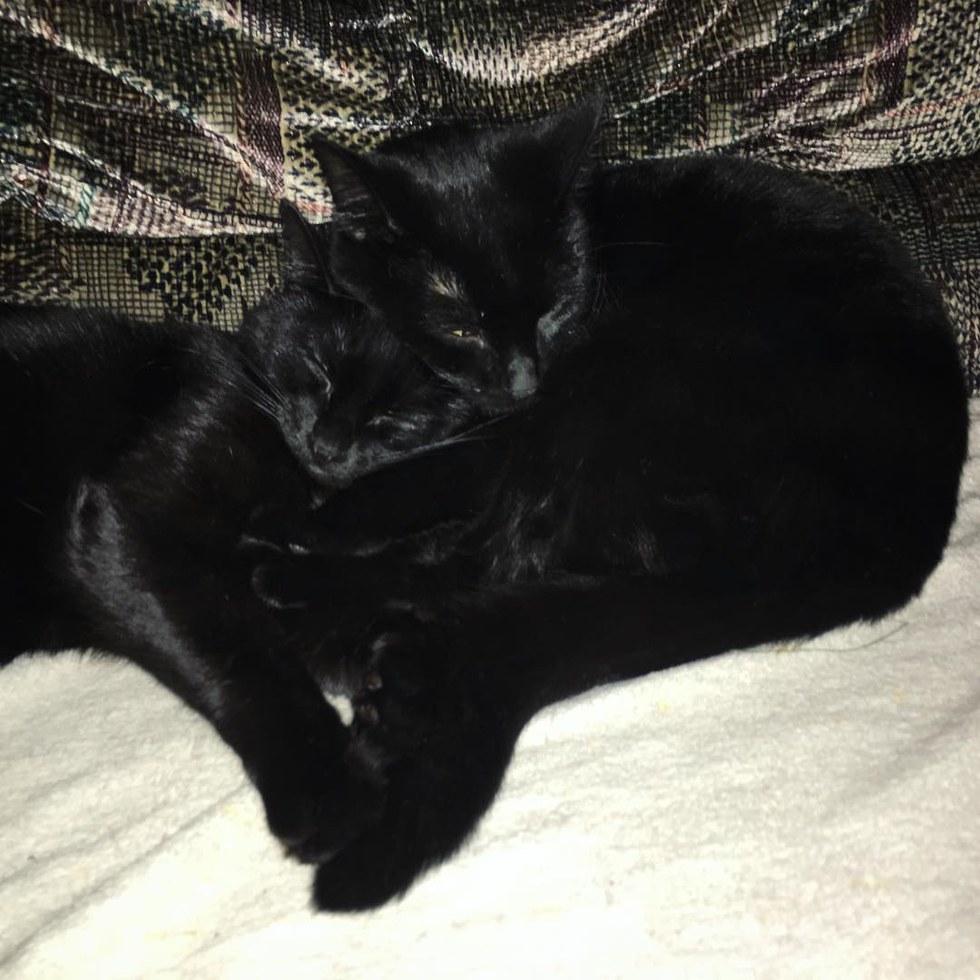 Слепой енот привел двух котят к человеку и этим поступком спас малышам жизни!