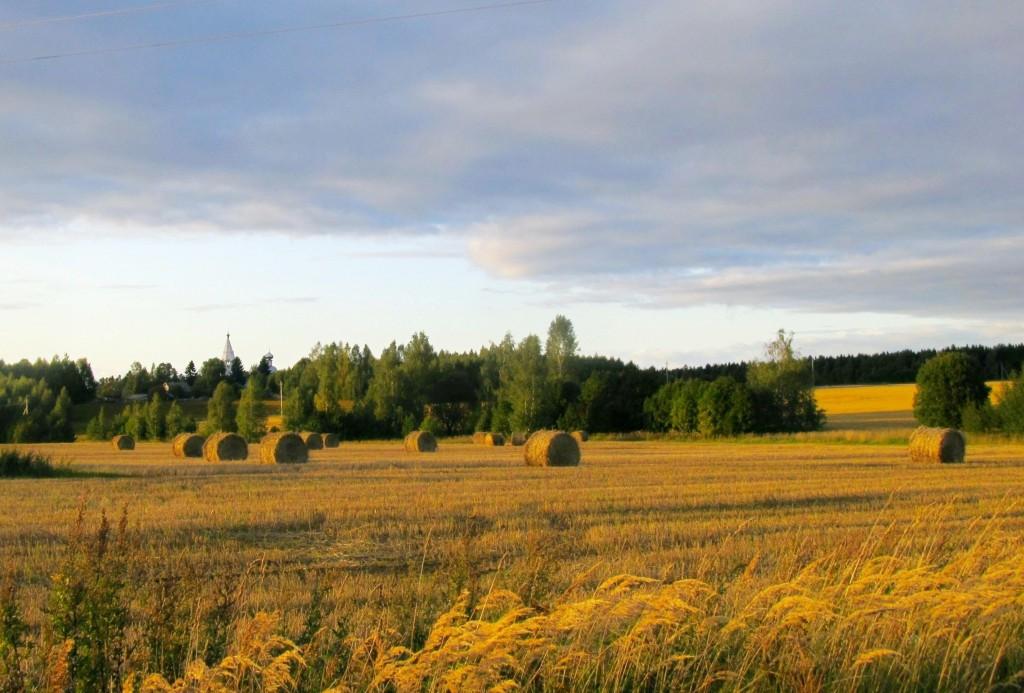 Осенние поля.