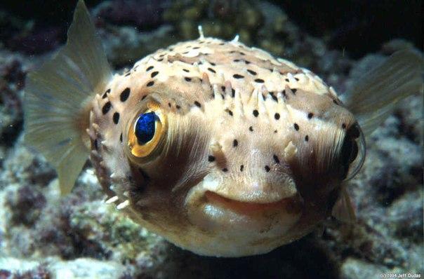 Самые дорогие рыбы в мире
