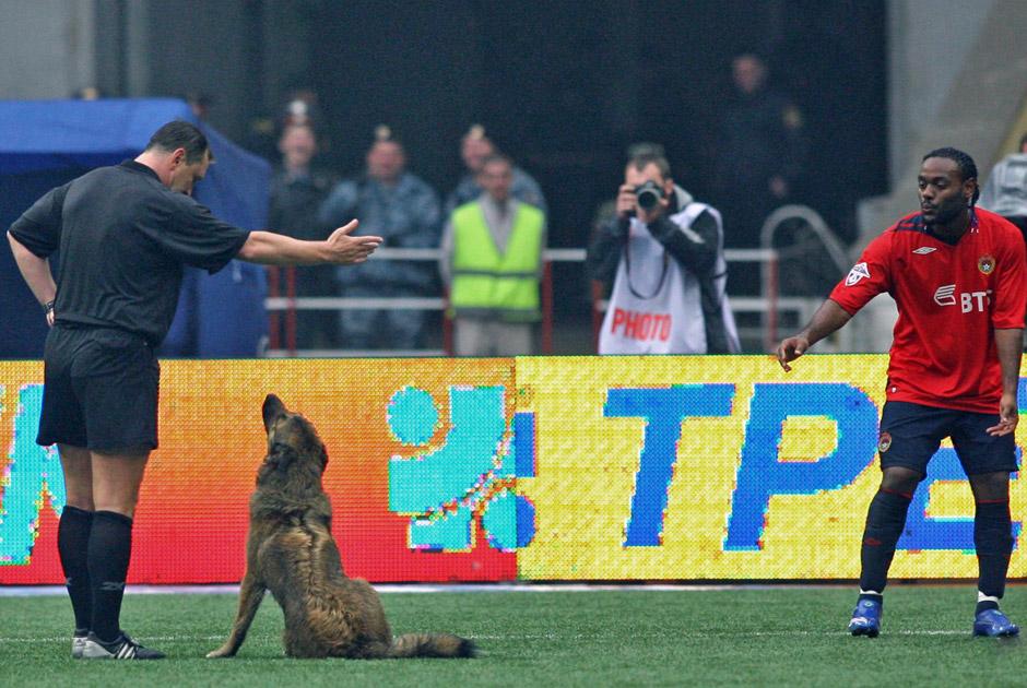 Животные на футбольных полях