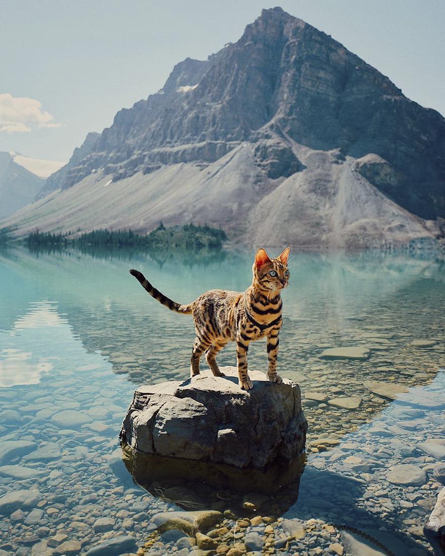 adventures-suki-the-cat-canada-1-59b2972ae7637__880