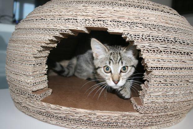 Девушка построила для кошки потрясающий домик-иглу из картона и вот как она это сделала